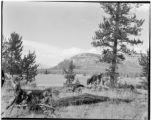 Man and horses waiting beside Bridger Lake